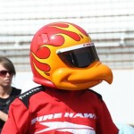 What is the FireHawk bird looking at?